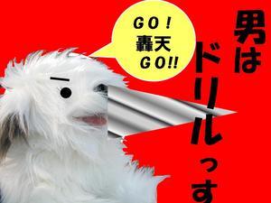 gogo10